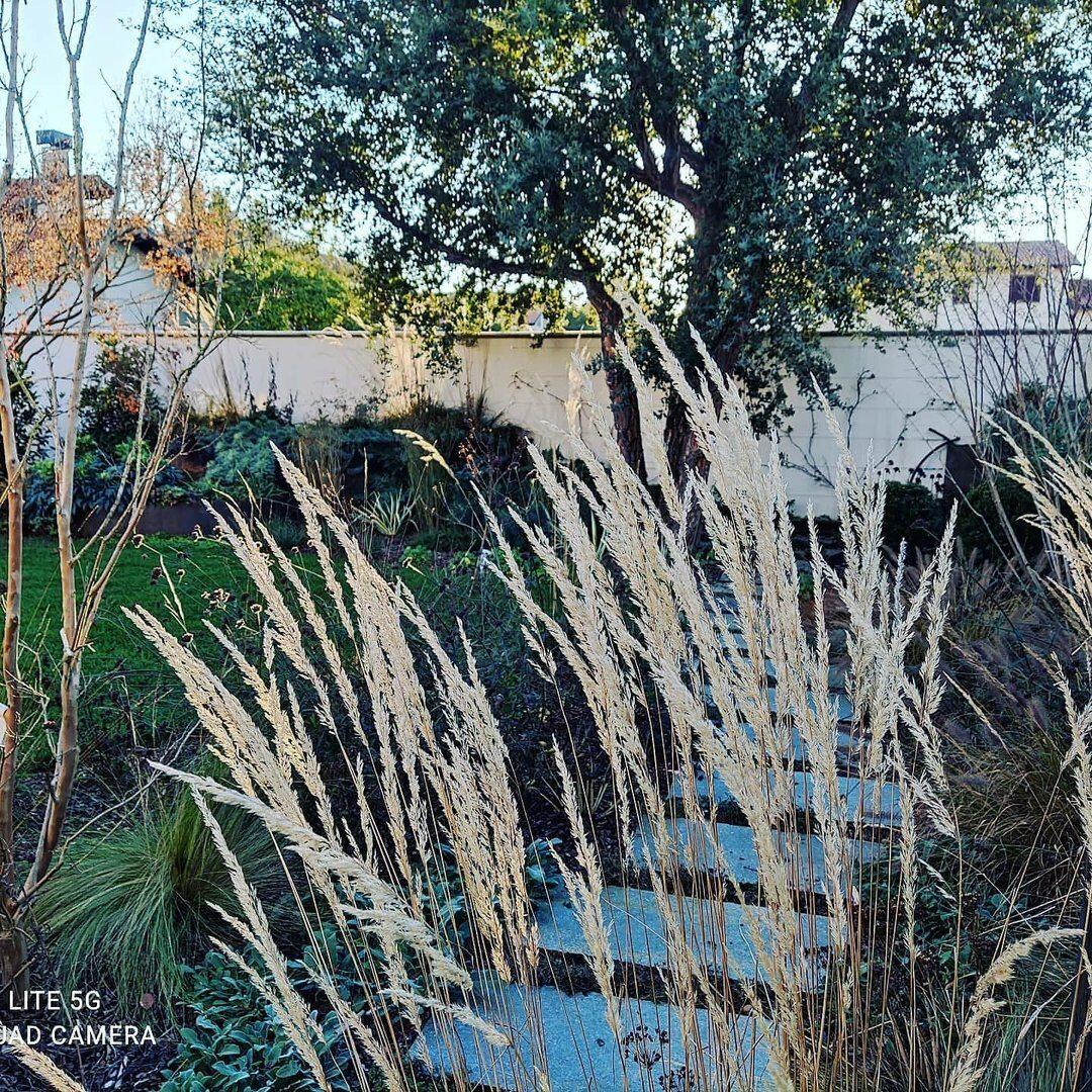 Lenna Giardini